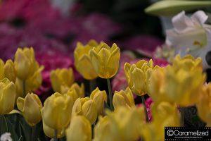 Festival of Flowers 2015